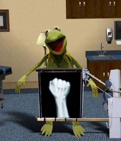 File:Kermit-xray-photo.jpg