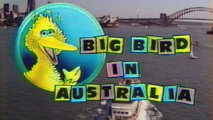 Big Bird in Australia