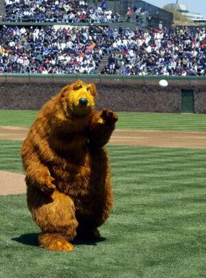 Bear.baseball