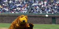 Bear baseball appearances
