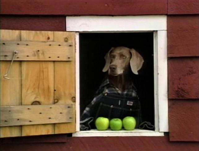 File:FayRay-Apples.jpg