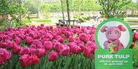 Sesamstraat Tulip