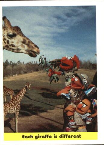 File:1992 sesame trading cards 98.jpg