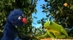 Grover-Frog