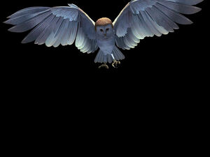 Labyrinth owl