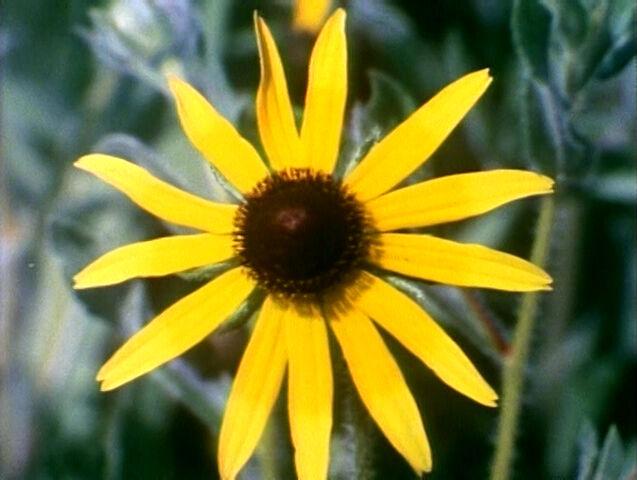 File:2623-Flowers.jpg