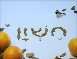 Shalom16-04