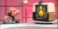 The Pig Attraction