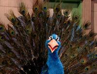 Ming-Peacock