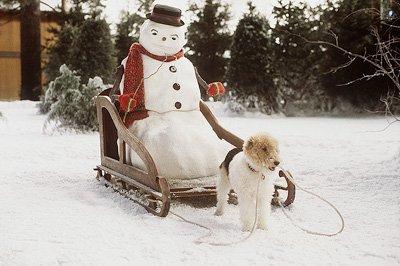 File:Snowman-jackfrost.jpg