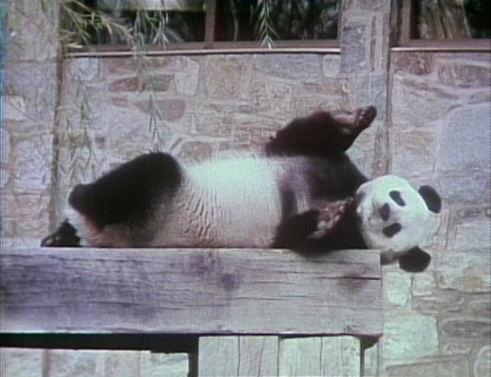 File:Itchy-Panda.jpg
