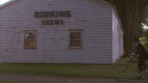 Glass ceiling birkins farms