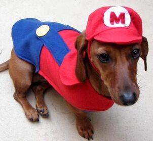 Mario-puppy-costume