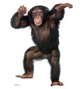 1486 Young Chimpanzee 34