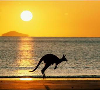 File:Australia kangaroo.jpg