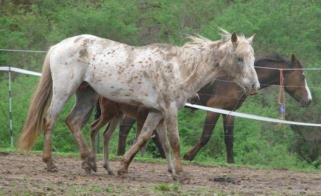 File:Un caballo.jpg