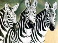 File:Zebras2.jpg