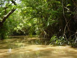 250px-Amazon Rainforest