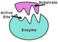 Enzyme.png