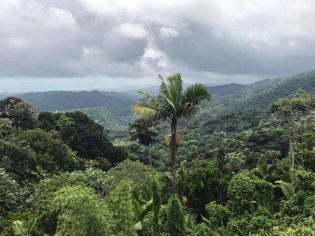 File:Un árbol de playa en el bosque tropicale.jpg