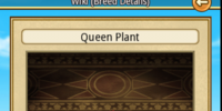 Queen Plant
