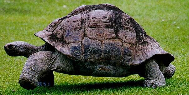 File:TurtleLuke.jpg