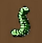 Bristleworm e