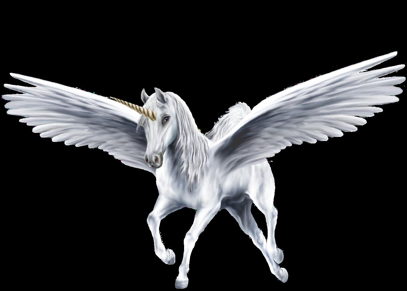 image an beautiful white winged unicorn unicorns 39364232 1300