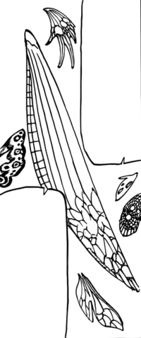 File:Fairy Wings.png