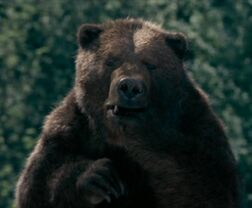 Bearsuckingpaw