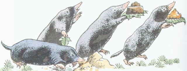 File:Moles.jpg