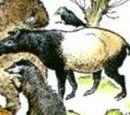 Тапиры
