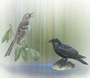 King Raven and the Mockingbird