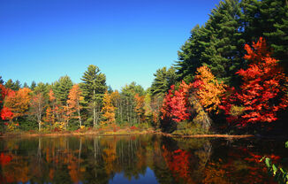 Lake-foliage