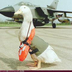 A pilot during the war.