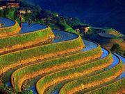 Mayan farm