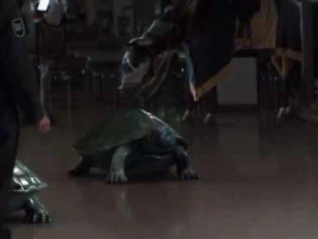 File:Turtle.jpeg