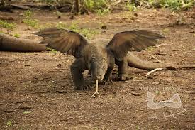 File:Fly dragon.jpg