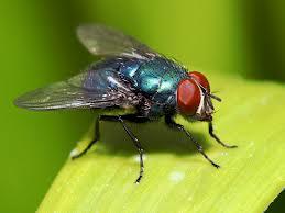 File:Th fly.jpg