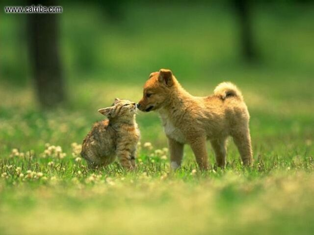 File:Catsanddogs.jpg