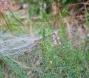Spinnennetze im Tau 12. September 2010