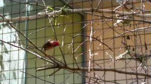 Unbekannter kleiner bunter Vogel im Zoo Augsburg - 18. Mai 2013
