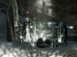 Dark Forest 05