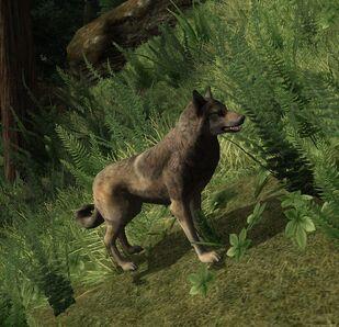 Wolf cr