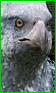 Banner-PT1-Buckbeak