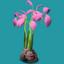 ORN Pink Mangrove Propagule