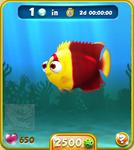 Red-Yellow Bicolor Angelfish