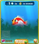 Red Hawkfish