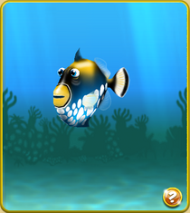 Epic Clown Triggerfish