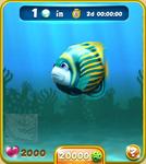 Blue Emperor Angelfish